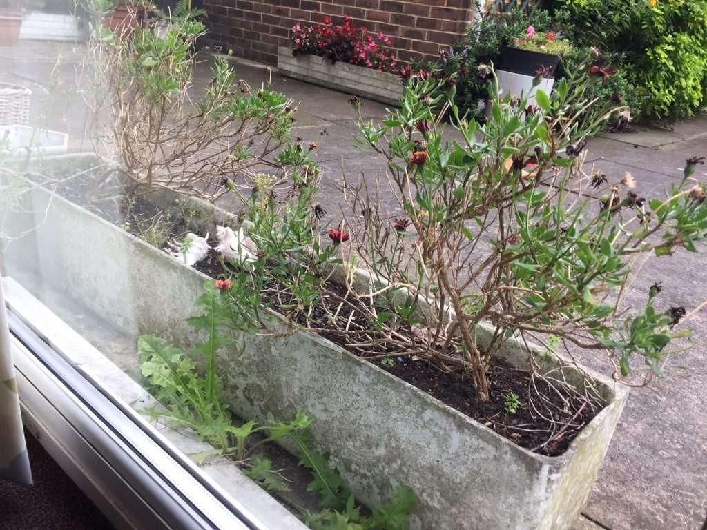 Asbestos cement pre cast plant pot