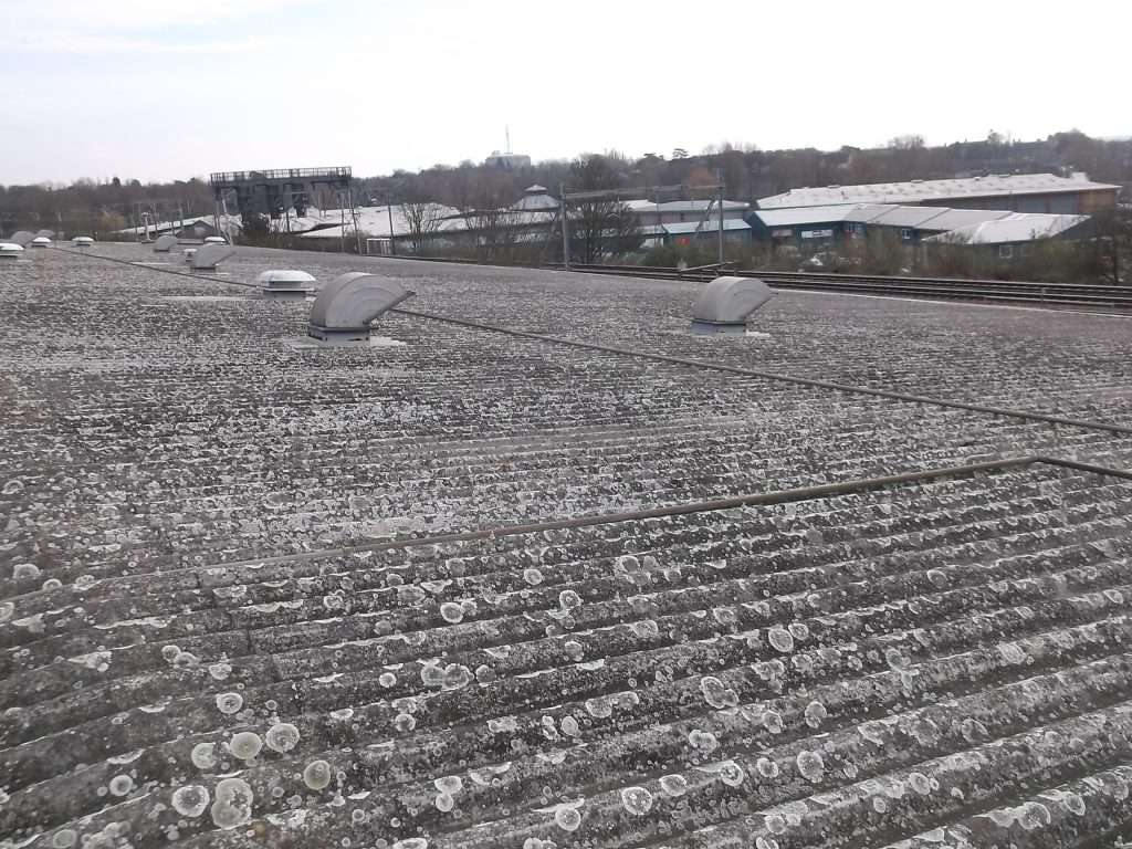 Asbestos cement roof to warehouse building with moss and lichen growth