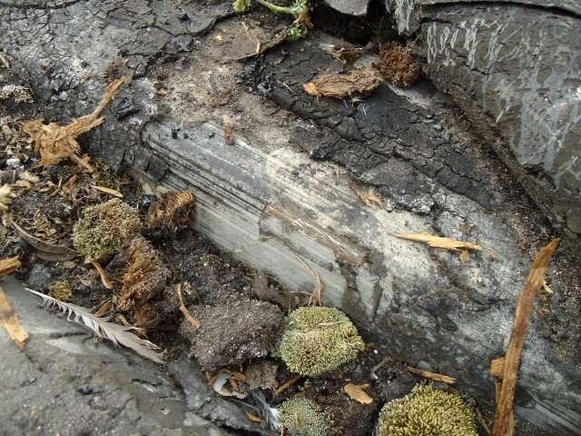 Asbestos felt to roof
